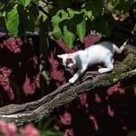 Kitty Tree Descent thumbnail