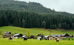 Hallstat, Austria (szeke) Tags: countryside trees grass green clouds cows pine