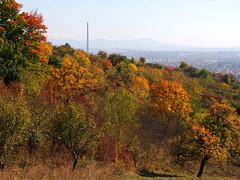 októberi kilátás / October view (debreczeniemoke) Tags: ősz autumn rét meadow színes colorful fa tree város city nagybánya baiamare olympusem5