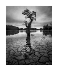 Replenish (Mike Hankey.) Tags: sunrise grey longnecklagoon cloud focus mud rain landscape published