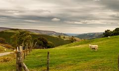 _DSC3605-334-331 (SteveKenilworth2014) Tags: glyndyfrdwy llangollen dinas bran valley wales denbishire panorama bw black white sheep farmland mountains mountain castle river dee countryside country lane clouds