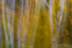 20181007-DSC_0073.jpg (GrandView Virtual, LLC - Bill Pohlmann) Tags: intentionalcameramovement autumn blur fallcolors fifieldwi nature wisconsin abstract chequamegonnationalforest smithrapids icm colorfulleaves