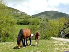 Argüeso (santiagolopezpastor) Tags: espagne españa spain castilla cantabria caballo caballos horse horses