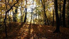 Autumn Fairytale 82 (rimasjank) Tags: leaf sunrise sun autumn nature landscape