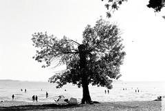 0001140-R1-E023 (gracito14) Tags: yashica fx3 super2000 fujifilm acros 100 blackwhite blackandwhite bw film slr north beach burlington vermont lake champlain tree