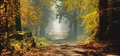 Klecker Wald - Herbstfarben - Autumn colors (Pana53) Tags: photographedbypana53 pana53 naturundlandschaftsfotografie herbstfärbung herbstfarben waldweg wald buchenwald landscape landschaft sonnenschein laubfärbung natur flora outdoor niedersachsen buchholznordheide kleckerwald nikon nikond500 panorama nebel holz gras baum holzstämme texturzeichnung textur ebenen naturfoto