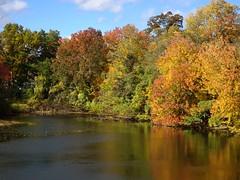 DSC04944b (Naturecamhd) Tags: dschx90v hx90v newyorkbotanicalgarden nybg botanicalgarden nature bronx green eco sonyhx90v thebronx sonydschx90v fall fallfoliage autumn twinlakes