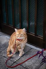 猫 (fumi*23) Tags: ilce7rm3 sony 85mm fe85mmf18 sel85f18 street a7r3 alley animal katze gato neko cat chat tokyo feline emount ねこ 猫 ソニー 東京