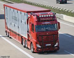Himml Transporte (D) (Brayoo) Tags: livestock mb actros transport truck trans lkw lorry customized