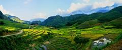Sapa_2018_011-013_ji_ji (expat-) Tags: sapa vietnam panorama landscape ricefields