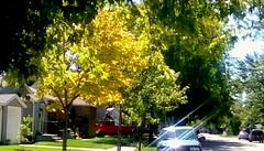 First Autumn colors! - TMT (Maenette1) Tags: autumn colors yellow neighborhood menominee uppermichigan treemendoustuesday flicker365 allthingsmichigan absolutemichigan projectmichigan