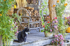 Porch Sittin' (jmhutnik) Tags: twinfallsresortstatepark pioneerfarm october cat porch wood chair flowers fall autumn westvirginia pumpkin