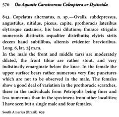 Copelatus alternatus Sharp, 1882:576, original description. (Wolfram Sondermann) Tags: brazil taxonomy:order=coleoptera adephaga dytiscoidea taxonomy:family=dytiscidae copelatinae taxonomy:binomial=copelatusalternatus originaldescription davidsharp
