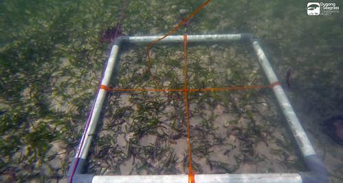 Monitoring Lamun Kobar P2_08