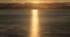 Sunset over the Moray Firth (Troonafish) Tags: canon canon7d 7d bigma sigma sigma50500mm 50500mm 2018 gavintroon gavtroon scotland scottish morayfirth trouphead aberdeenshire sunset sun sunsets sunsetoverwater sunsetoversea sunlight bestview orangesky orange scottishlandscape scottishscenery scottishcountryside scottishcoastline scenery sea seascape coast coastline coastal summer summertime sky evening eveningsky eveninglight