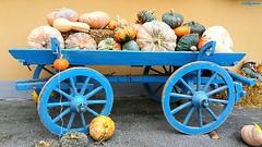 zucche (archgionni) Tags: zucche pumpkins carro cart blu blue legno wood ruote wheels festa party cibo food