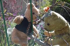 Up in a Tree (Emily1957) Tags: americanoldbear steiff bear vintage oldantiquebear bears toys toy old light naturallight nikond40 nikon