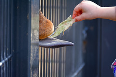 In Any Tongue (Alfred Grupstra) Tags: humanhand outdoors animal people urbanscene holding bird street fence giraffe