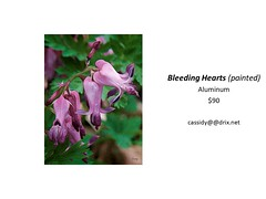 "Bleeding Hearts (painted) • <a style=""font-size:0.8em;"" href=""https://www.flickr.com/photos/124378531@N04/44449290115/"" target=""_blank"">View on Flickr</a>"