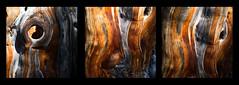 God da Tamangur (Toni_V) Tags: rangefinder digitalrangefinder messsucher leicam leica mp typ240 type240 hiking wanderung randonnée escursione tamangur goddatamangur arve arvenwald valscharl tree baum graubünden grisons grischun unterengadin engiadinabassa switzerland schweiz suisse svizzera svizra europe ©toniv 2018 181013