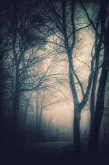 witchcraft (***étoile filante***) Tags: light licht mysterious mystisch mystical dreamy dream street strase trees tree baum bäume wald woods forest fog foggy pentax winter cold kalt nature natur
