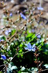 Flower 1 (miss_vectra photography) Tags: sonne toll nahaufnahme marko trotztrockenheit schön blume