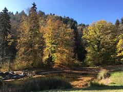Féerie automnale (Iris_14) Tags: automne autumn arbres feuillage aubonne arboretum vaud romandie suisse schweiz switzerland nature forêt forest