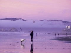 it was just one of those nights ... (kate beale) Tags: g1rlwithacurl sanfrancisco sunsetinthesunset oceanbeach sunsetdistrict pink redsky beach labradorretriever reflection kiteboarding