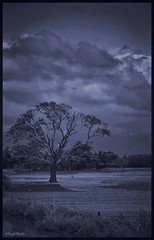 A Tree Of Hundred years (NaakShoots) Tags: street streetphotography sylhet sunamgonj tree walpaper walpapers photoshop naakshootsstreetshoot naakshoots
