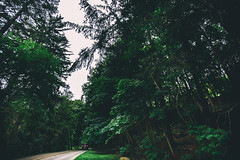 buscando | 1 (viewsfromthe519) Tags: green forest ontario canada tall trees path canadian nature london byron springbank park road