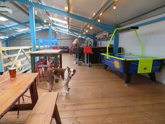 Dog In The Farm Yard... (deltrems) Tags: farmyardbrewery farmyard farm yard cockerham lancashire brewery welsh border collie pub bar inn tavern hotel hostelry house restaurant bailey