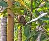 esquilo (jakza - Jaque Zattera) Tags: esquilo animal