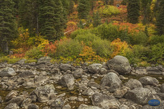The hills are flowing with color (TheArtOfPhotographyByLouisRuth) Tags: rocks fall colors orange green yellow mccall idaho landscapes mountains trees river stream water hills tree forest landscape rock grass artofimages flickr flickrcentral flickrsocial flickrexpert usriverscreeks landscapephotography ilovemynikon nikon 24mmf18 animal sellyourart idahophotographers fallcolorsinidaho nikond810official autofocuslevel1 autofocuslevel2 autofocuslevel3 autofocuslevel4 autofocuslevel5 autofocuslevel6 autofocuslevel7 autofocuslevel8 autofocuslevel9 autofocuslevel10 louisruthphotography bookcover bookcoverart art