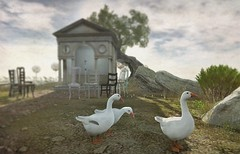 A Small Gaggling (ᗷOOᑎᕮ ᗷᒪᗩᑎᑕO) Tags: applefall af mainstore 8f8 landscape autumn vibe flickr sl secondlife telport locale location lm landmark phography photo 2018 quality gear geese wildlife family dof