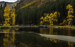 The End of Autumn (Daniel P Froese) Tags: tumwater canyon tumwatercanyon fall autumn fallcolors autumncolors leavenworth washington state washingtonst washingtonstate aspen yellow golden wenatchee river wenatcheeriver photo image picture photos images pictures landscape