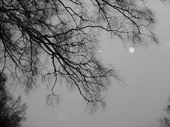 Twisting (Julian Virsu) Tags: finland suomi november autumn grey branches tree trees sky greyscale