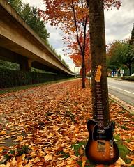 Fall has Fallen (Pennan_Brae) Tags: musicphotography guitarphotography music autumnleaves fallleaves autumn fall electricguitars electricguitar guitars guitar fendertele fenderguitar fenderguitars fendertelecaster telecaster