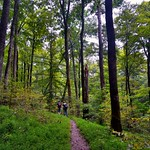 I Fancied a Date in the Woods with Whom I Love (Mammoth Cave National Park) thumbnail