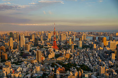 Tokyo Tower from Roppongi Hills (Joshua Mellin) Tags: japan visitjapan autumn joshuamellin asia travel traveling postcard amazing incredible best site sites location locations tips flights tourism blogger writer photographer picture pictures nippon tradition culture images jp october november fall 2018 current destination destinations 2019 olympics 2020olympics 2020olympicstokyo tokyo city modern global worldwide instagram instagrammable joshua mellin joshmellin chicago host cnn cnntravel contributor editor purple colors sunset shadows afternoon tokyotower tokyojapan tower eiffel eiffeltower orange red white replica japanese night light