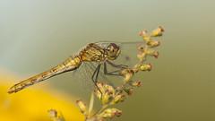 000730-) (andrzejreschke) Tags: insects reptiles plants grass nature butterfly lizard moss flowers beauty beautyofnature