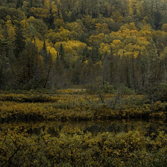 DSC_1741 (StephenF64) Tags: woods bog michigan trees fall nature