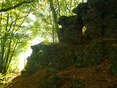 P1210209 (Jörg Paul Kaspari) Tags: wanderung wandertour herbst autumn fall 2018 diebergkraterseetour lava lavaklippe lavaklippen buchenwald mosenberg