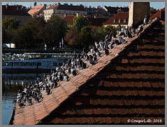 October days in Prague (cowgirl_dk) Tags: prag prague praha czechrepublic tjekkiet ferie vacation holiday storby city storbyferie cityvacation sunshine sol huse house cityscapes byliv europa europe citylife olympusomdem5ii lumixgvario14140mm olympus