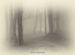 The foggy forest (Luca-Anconetani) Tags: fog forest trees