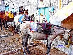 IMG_7056 Noble Beasts (Cyberlens 40D) Tags: europe europeancities greece islands travel destinations sightseeing rides forhire beast animales fauna santorini culture cultural donkeys greektaxis fira