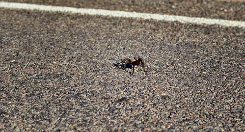 A Spider Companion Along the Road As I Composed an Image (Big Bend National Park)