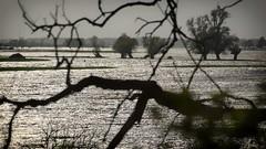 *** (pszcz9) Tags: polska poland przyroda nature natura naturaleza nationalpark parknarodowy ujściewarty drzewo tree woda water beautifulearth sony a77 pejzaż landscape