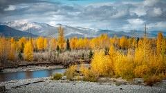 Golden Panorama (helenehoffman) Tags: autumn creek evergreen pine forest snow stream glaciernationalpark trees montana northforkrd aspen clouds water tree landscape sky mountain