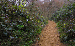 NDW - Part 1 (Terry Rayment) Tags: northdownsway nationaltrail hiking