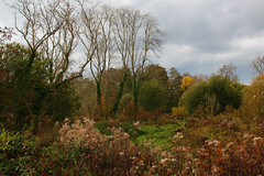 Hampshire Woodland Autumn Colours (iwys) Tags: wood forest scene landscape autumn fall trees plants sky grass green brown beautiful hampshire